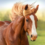 HorseOfCourse