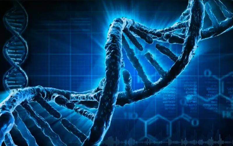 dna telomeres and telomerase