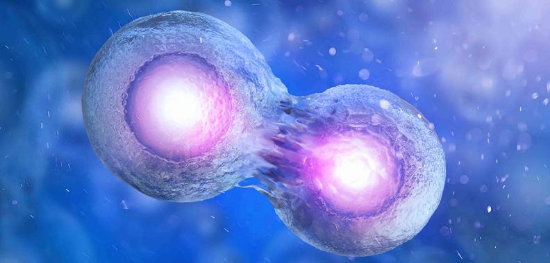 stem cell splitting