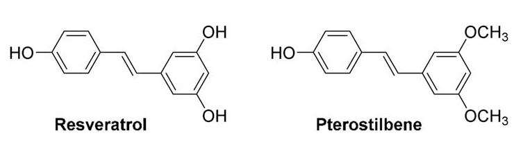 nootropics chemistry