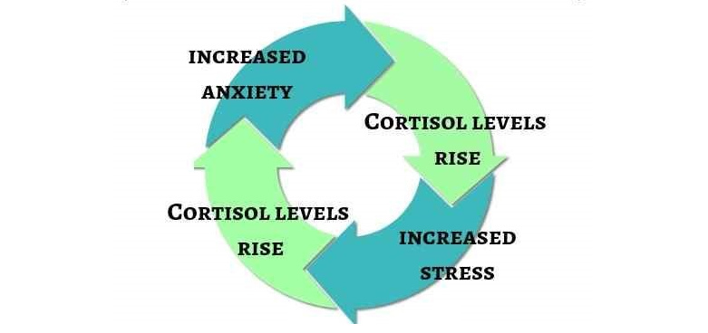 cortisol stress