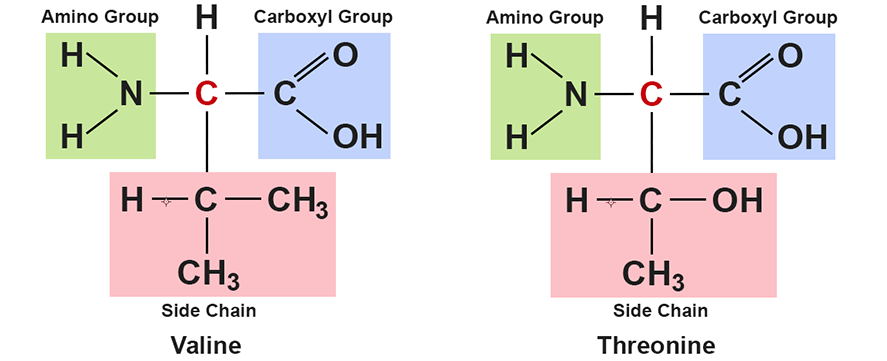 amino acid side chain differences
