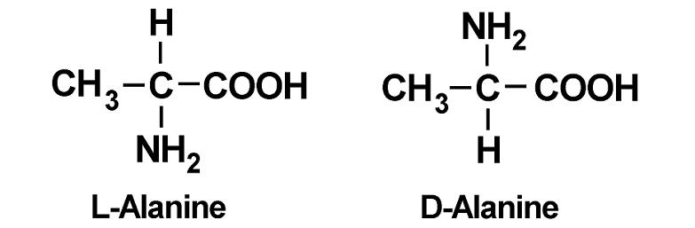 l alanine d alanine molecular