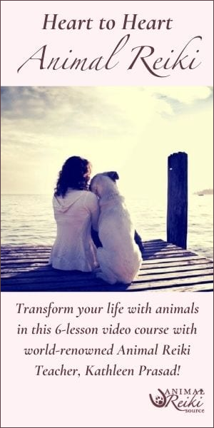 ad animal reiki source meditation package