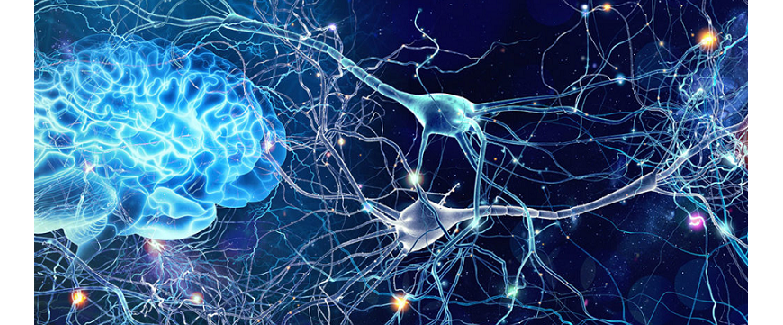neuroplasticity psychedelics